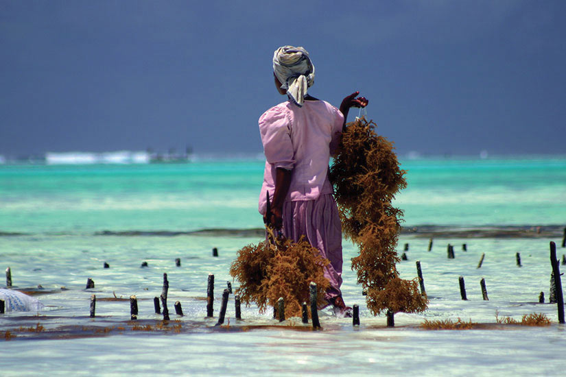 image Afrique Zanzibar femmes travaillent  fo