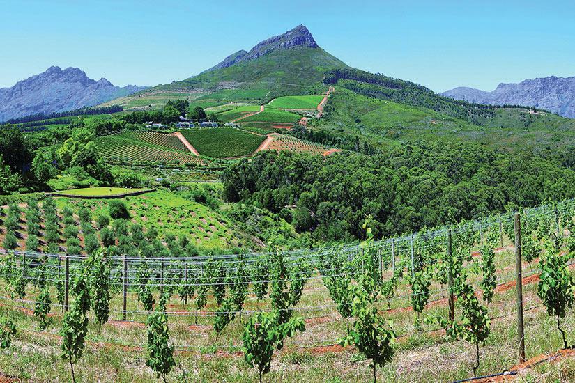 image Afrique du Sud Delaire Graff Vignoble  of