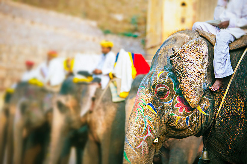 image Inde Jaipur elephant  it