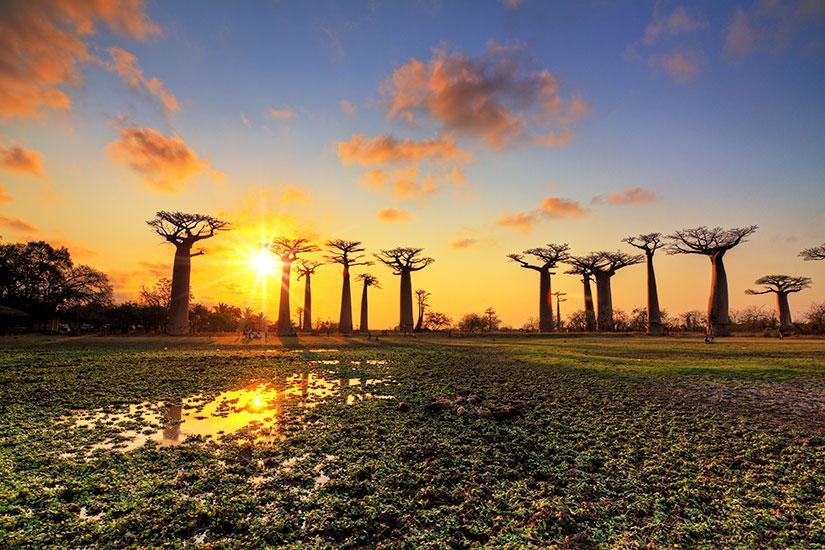 image Madagascar Baobab Paysage  it