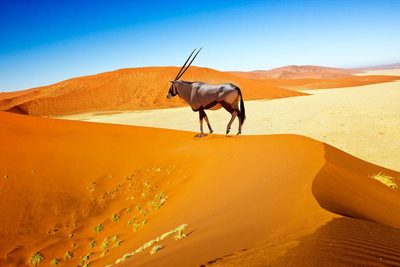 image Namibie sossusvlei dunes oryx  it