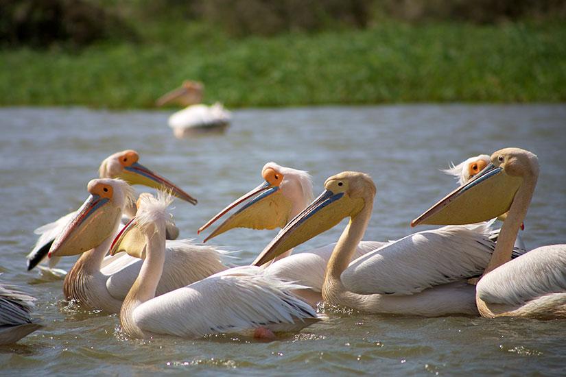 image Senegal Parc National Djoudj  it