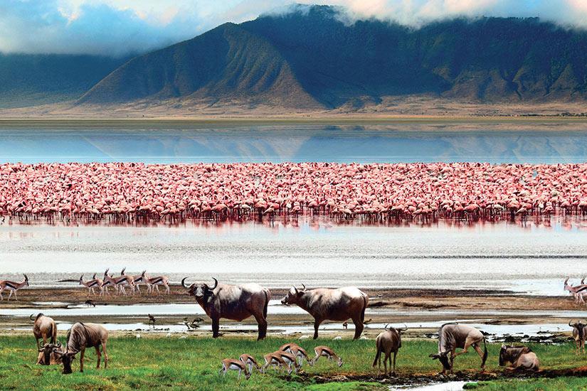 image Tanzanie NGorongoro la faune africaine  it