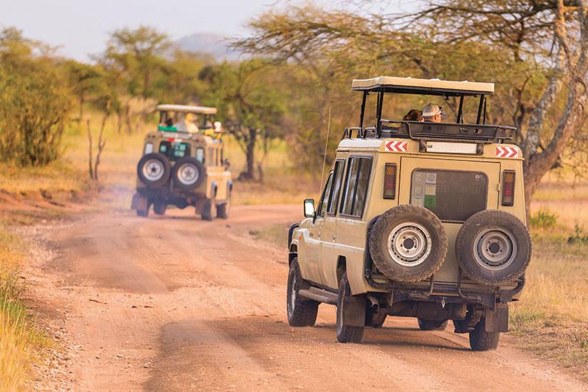 image Tanzanie Safari jeeps  fo