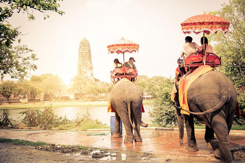 image Thailande Ayutthaya elephants  fo