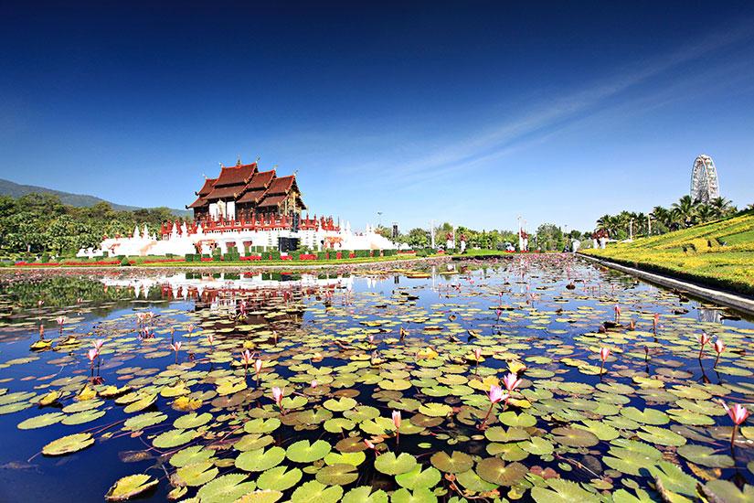 image Thailande Chiang Mai Flore royale Ratchaphruek  it